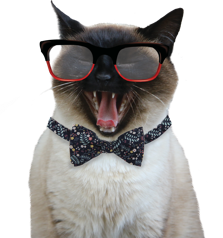 urban pet hipster cat