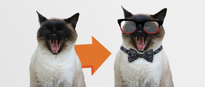 urban pet hipster cat how to